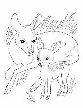 Kolorowanki Ze Zwierzętami Do Wydruku Ciekawostki Psy Koty