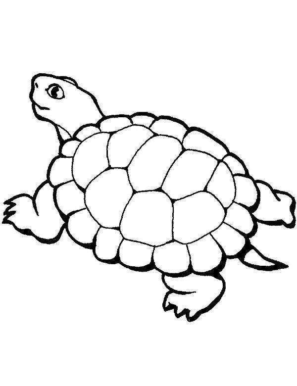 Malowanka z żółwiem