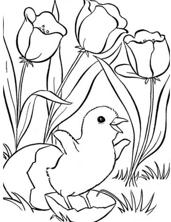 pretty animals coloring pages - photo#1