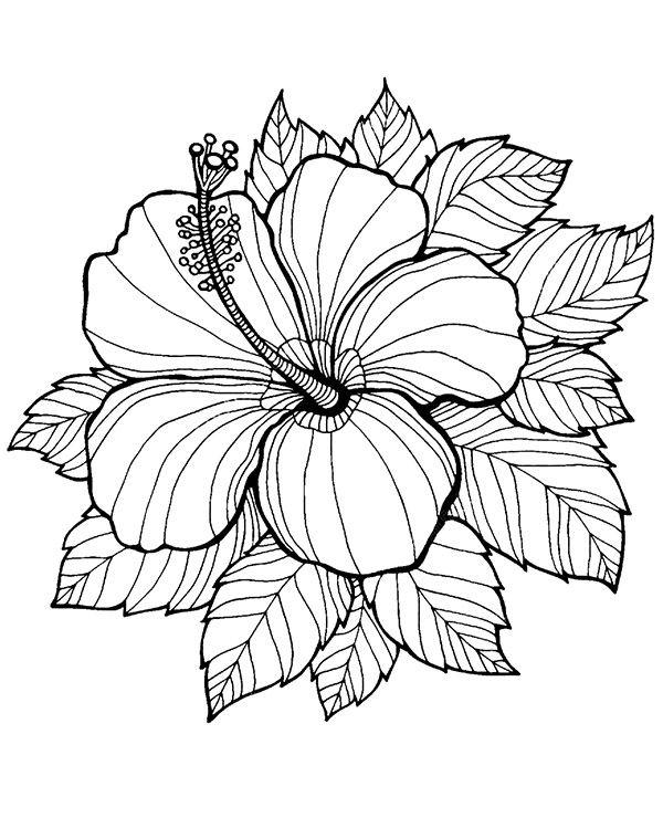 Kolorowanka Malowanka Dla Dorosłych Kwiat