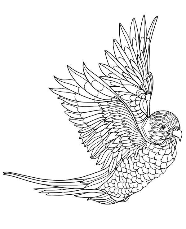 Papuga Ptak Malowanki Kolorowanki Dla Dorosłych