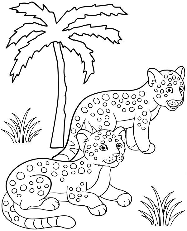 Jaguary kolorowanki do wydruku