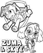 Malowanki Psi Patrol z Zumą I Skye