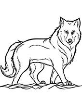 Kolorowanki Ze Zwierzetami Do Wydruku Ciekawostki Psy Koty
