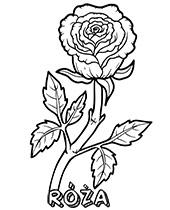 Darmowe Kolorowanki Kwiaty Do Wydruku