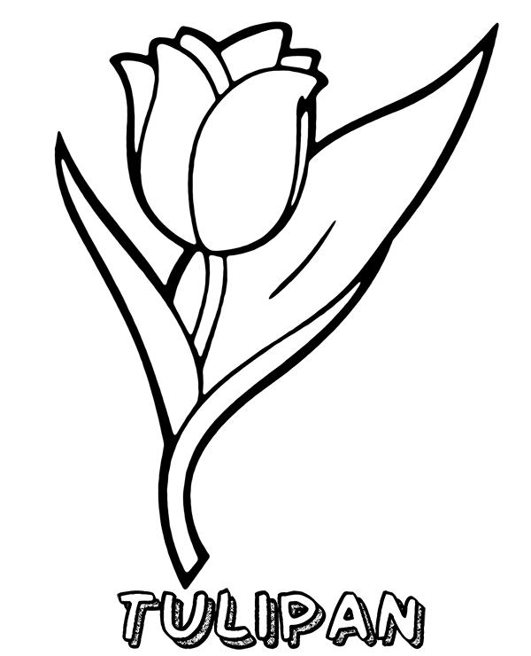 foto de tulipan kolorowanka do wydrukowania Kolorowanki do druku E kolorowanki